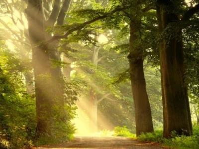 csikung-vilaga-forest-erdo